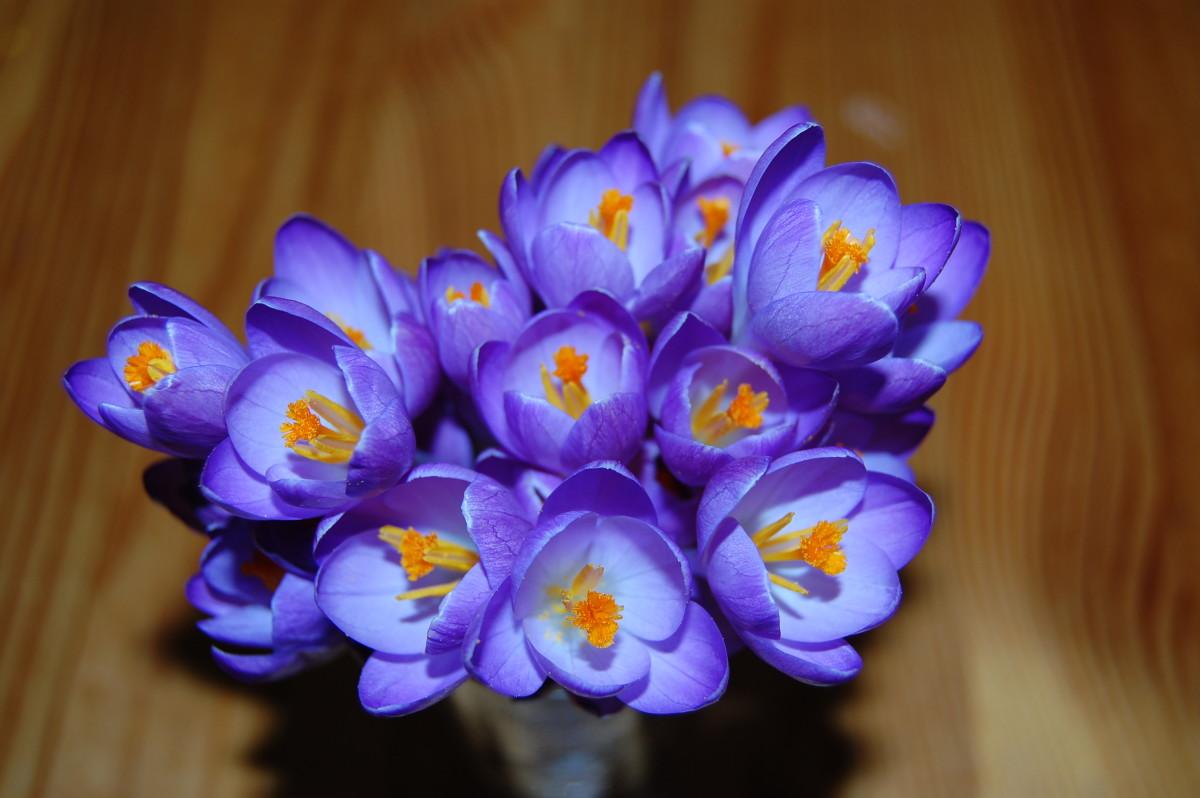 Frühling im Haus bei der Rückkehr des Winters