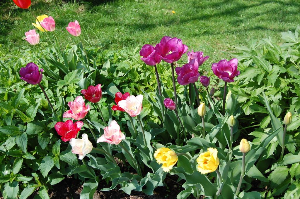 Blumenzwiebeln setzen