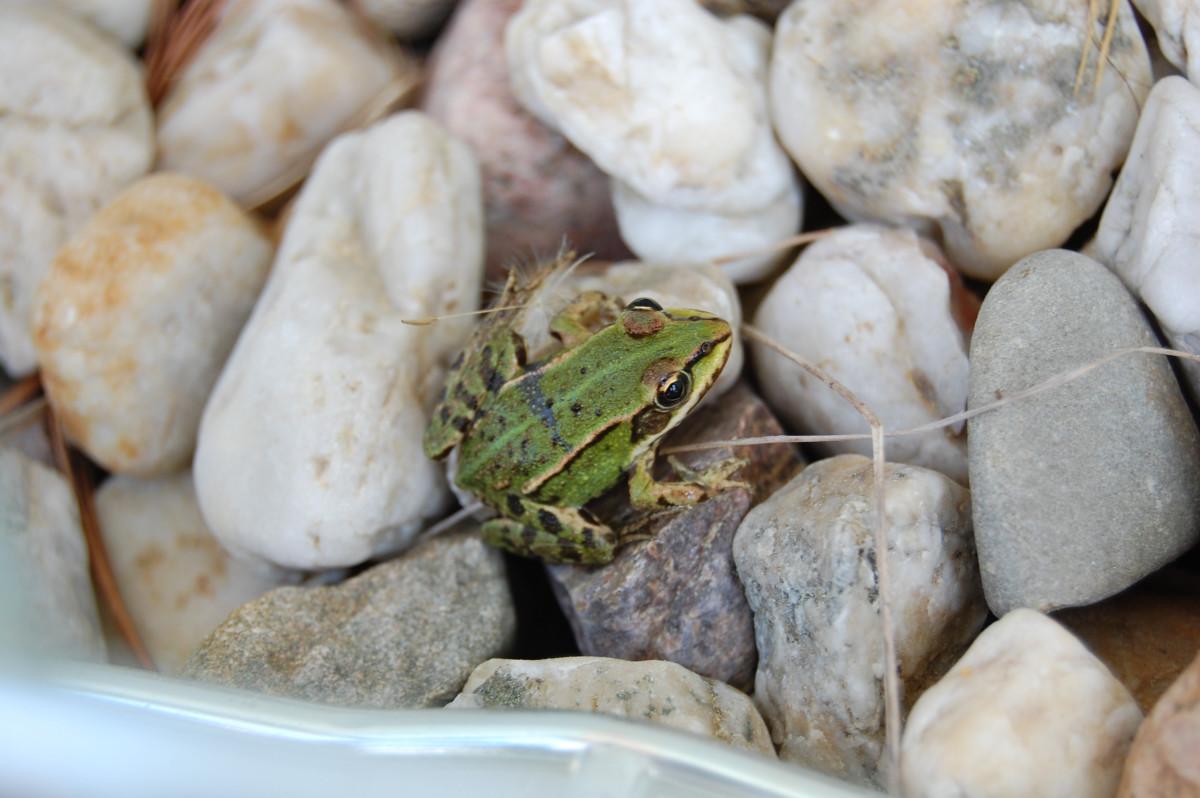 Sei doch ein Frosch – nur leise bitte!