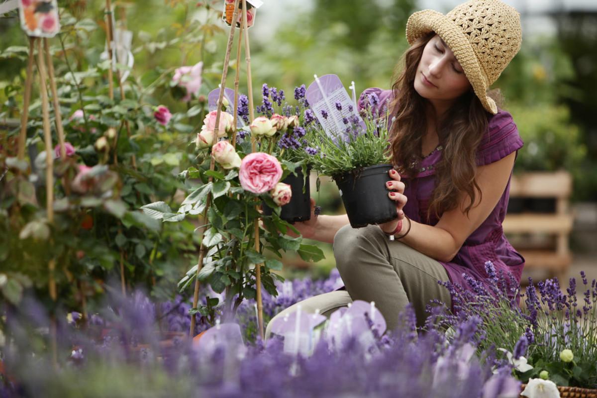 Pflanzenschau bei Späth: Betörende Rosen und ihre Begleiter