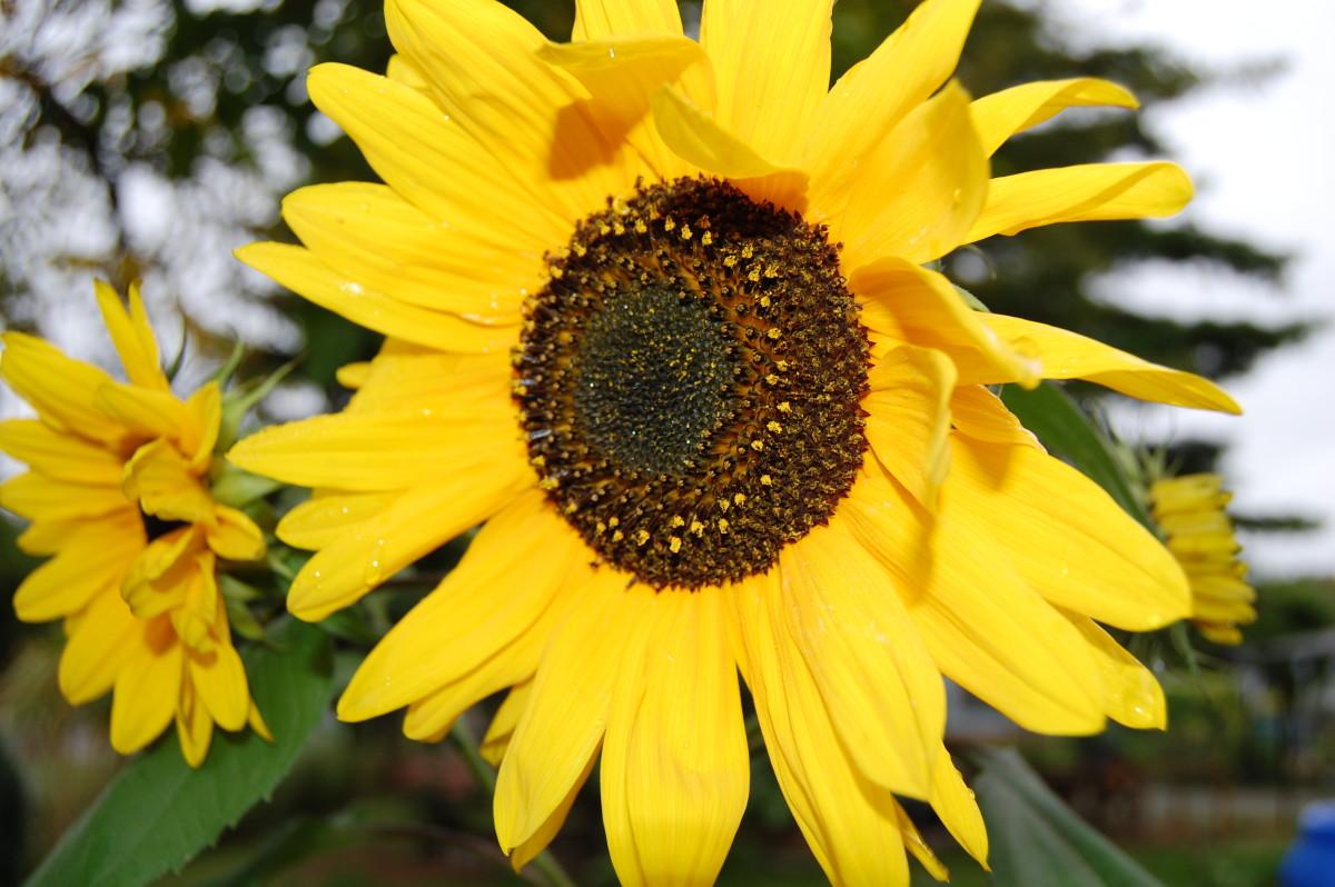 Herrlich leuchtende Blüten