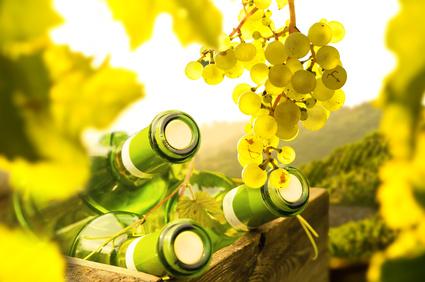 Späth'sche Baumschule lädt in der Winterpause zur Weinverkostung