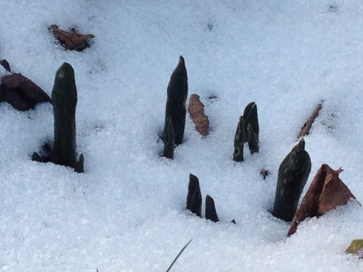 Der Frost hat den Garten fest im Griff