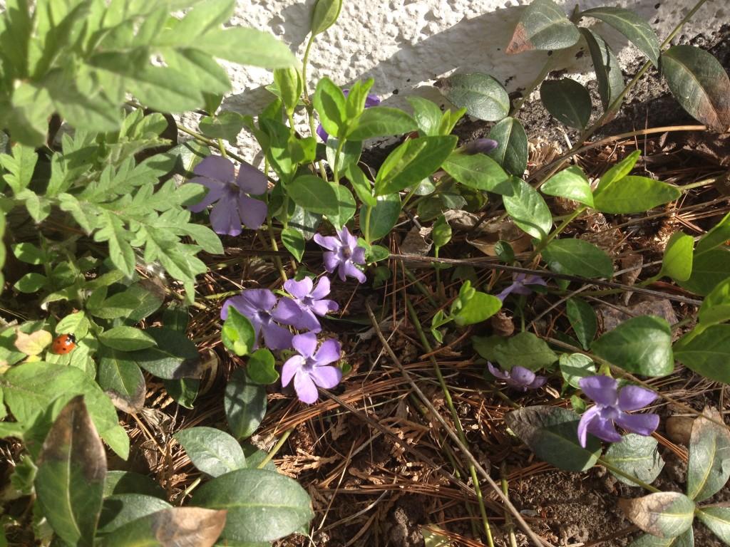 Frühlingsanfang Foto: Uta Richter