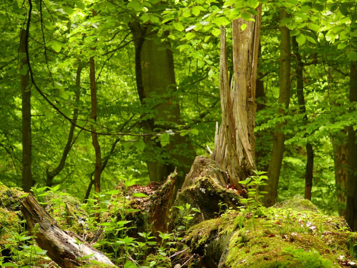 Mit Mach Wald für alle