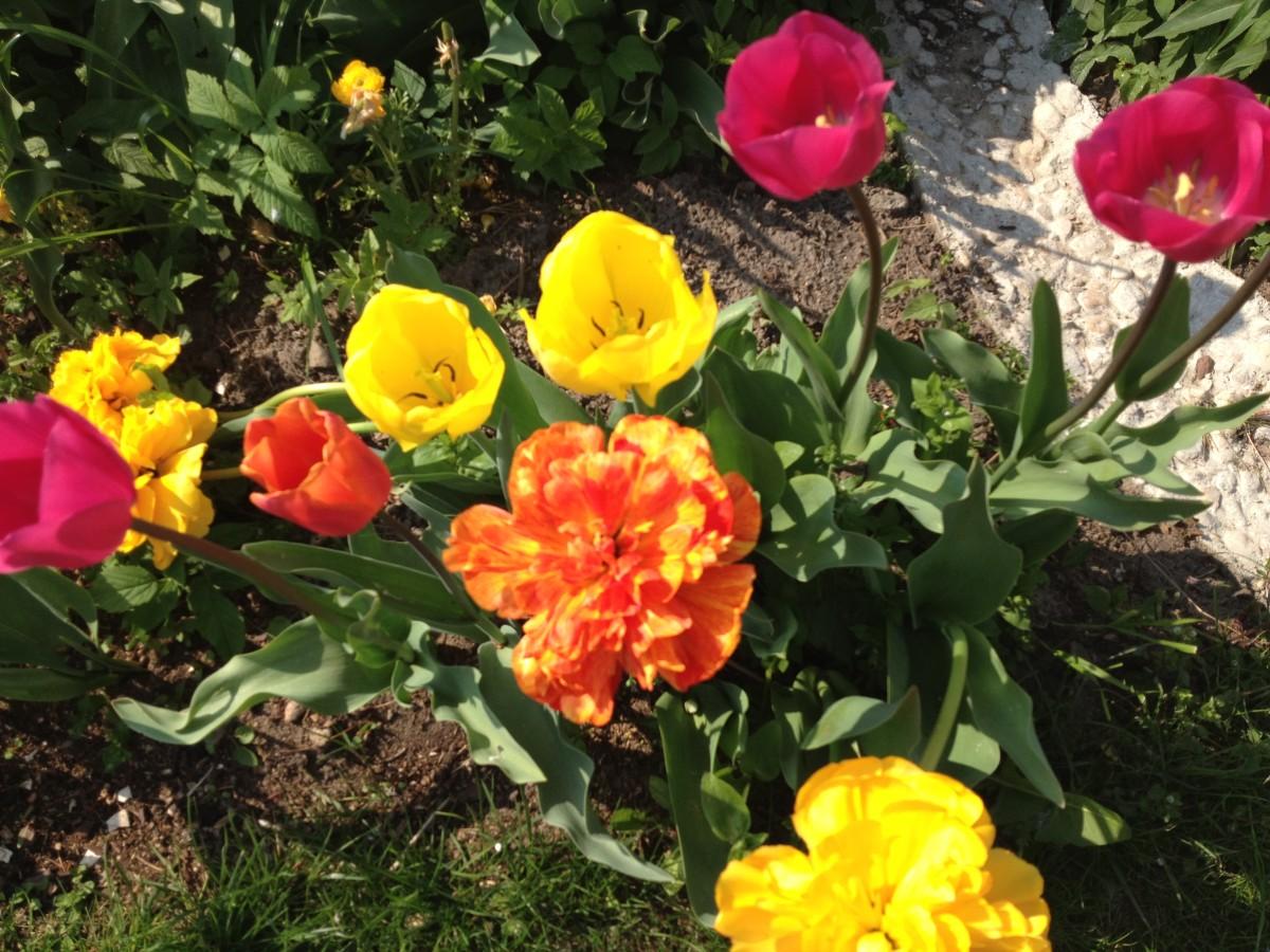 Durch die Blume