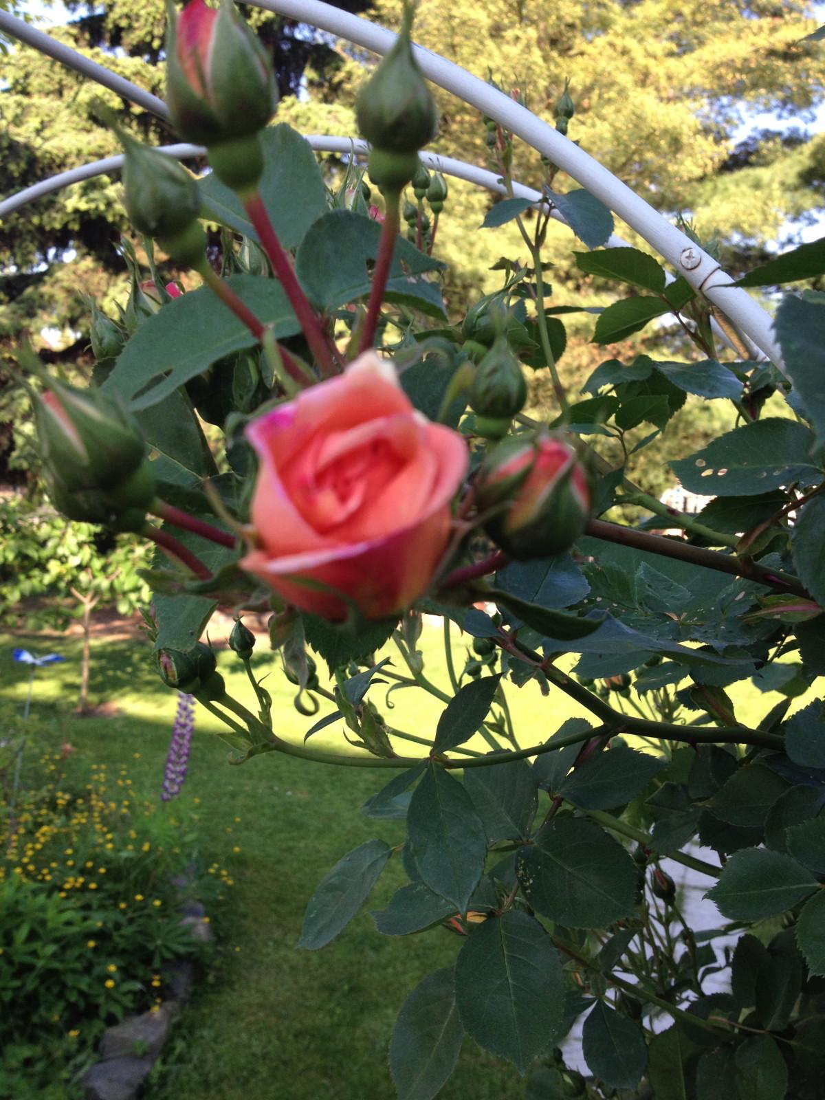 Gartenjahr 2014 – ein Rückblick