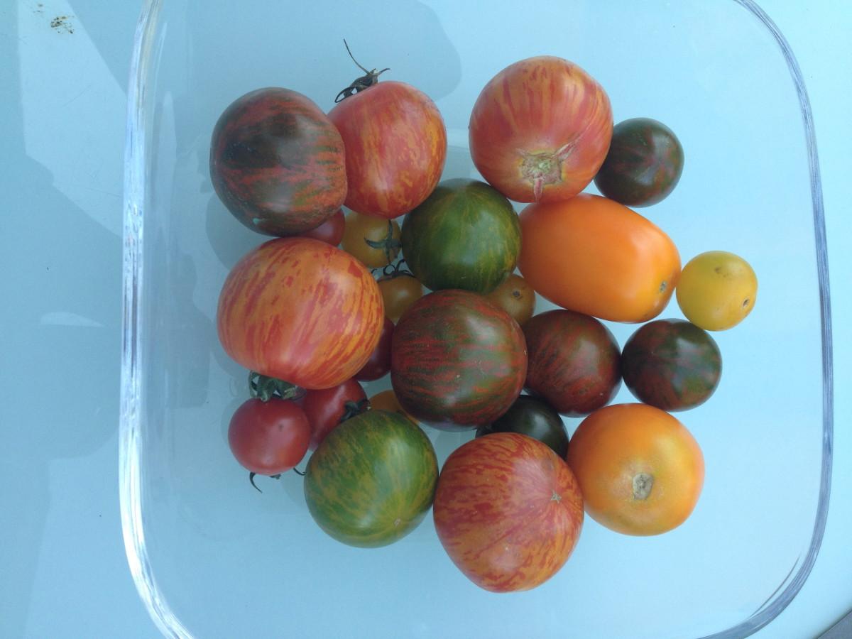 Tomaten vom Markt