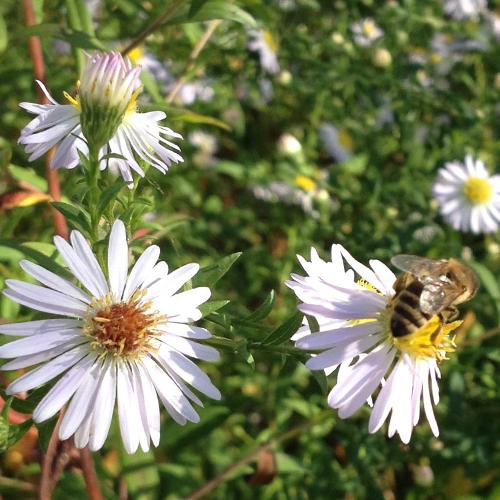 Endspurt für die Bienen