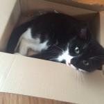 Katzen lieben Kisten Foto: L. Richter