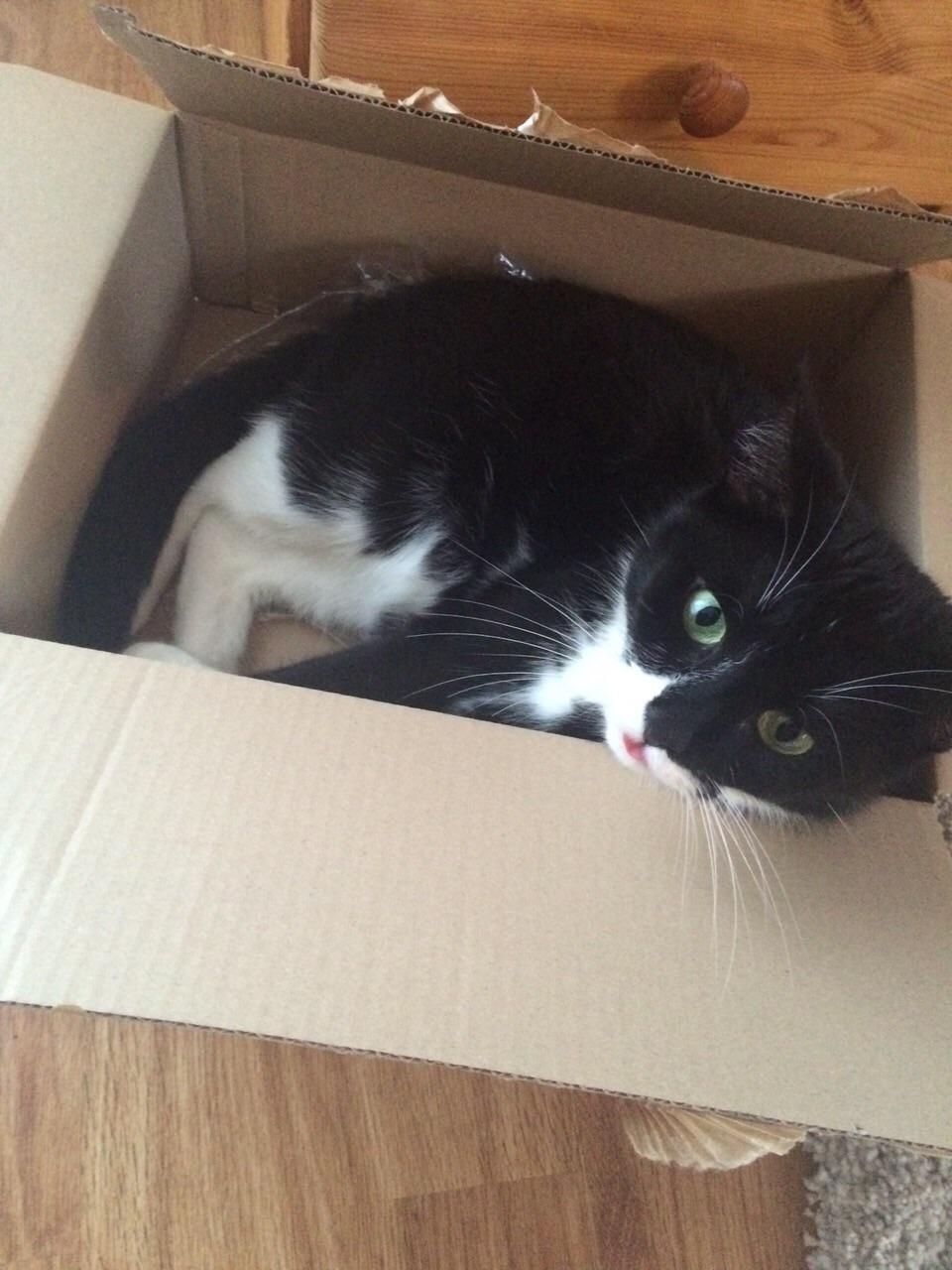Katzen lieben Kisten
