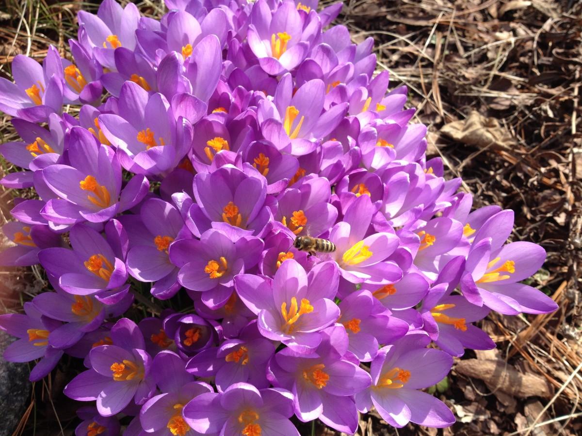 Frühlingsanfang in Richters Garten