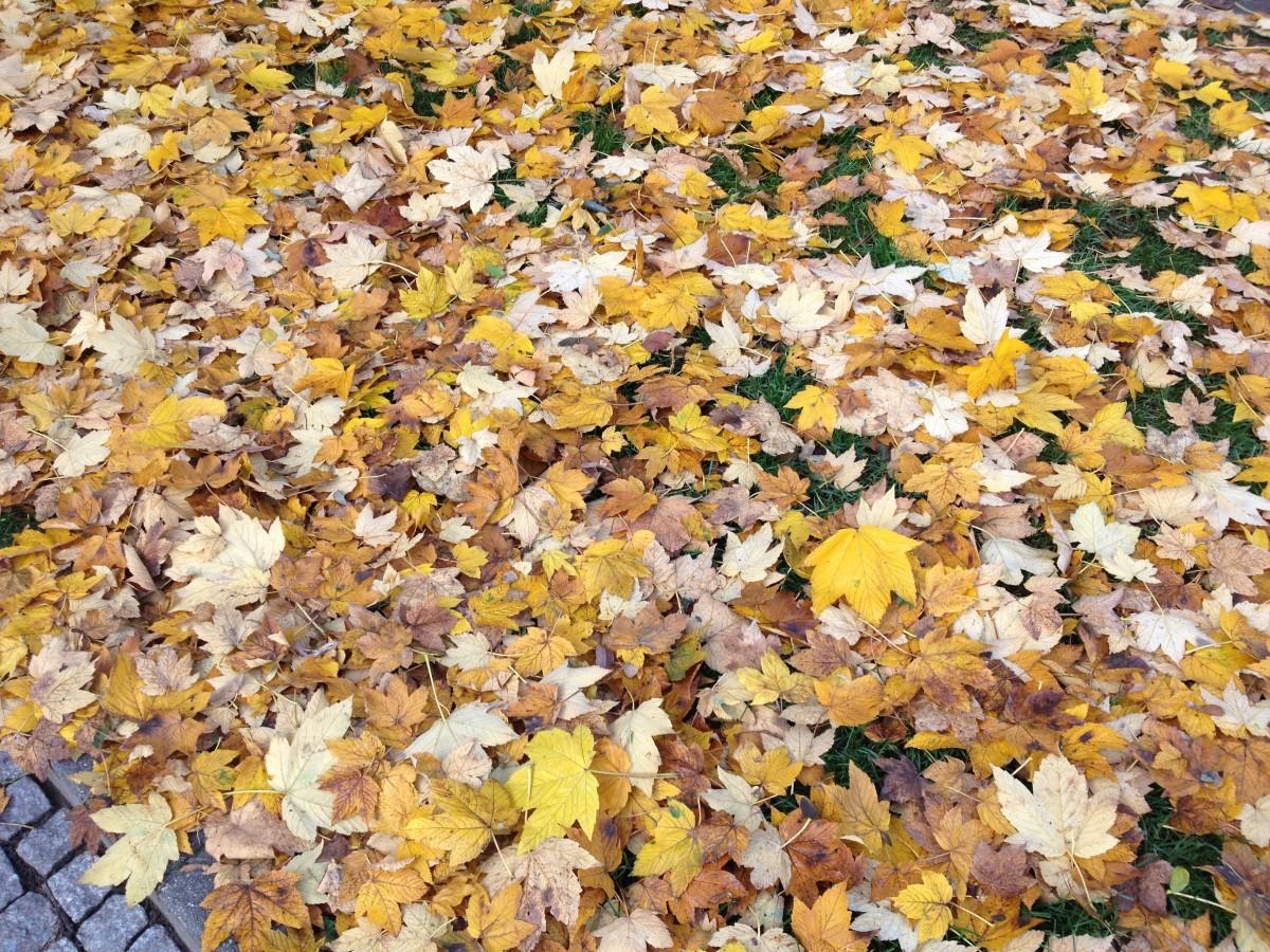 Herbst macht das Leben bunter
