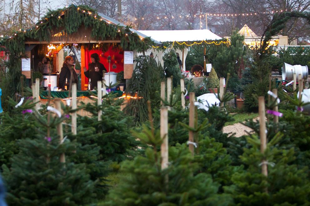 Start für den Weihnachtsbaumverkauf