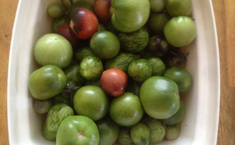 Super Tomaten reifen im Dunkeln noch nach - richtersgarten.de &UX_05